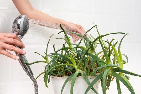 succulentes-salle-de-bain