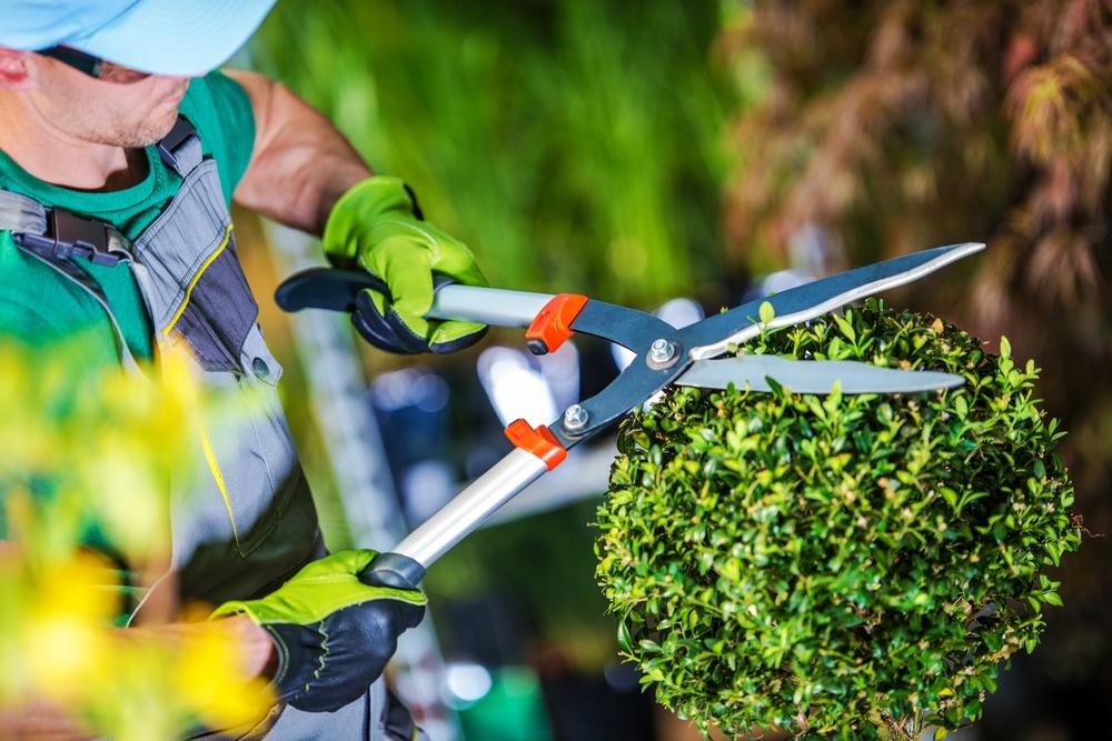 tailler jardin