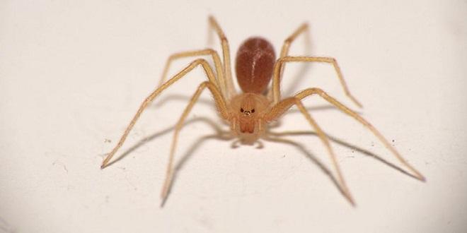 araignée maison
